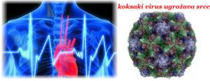 koksaki_virus_simptomi