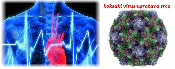 koksaki virus simptomi | lecenje | posledice