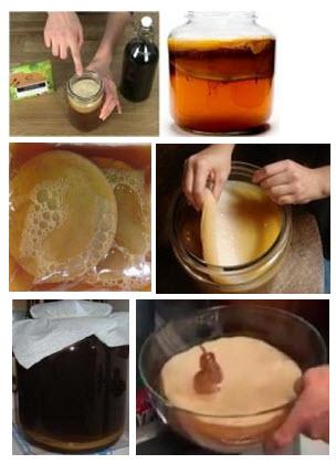 kombuha gljiva recept