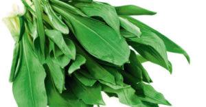 sremus biljka