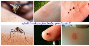 ujedi insekata