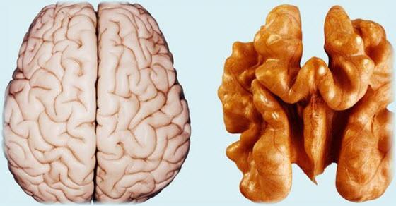 hrana za bolje pamćenje
