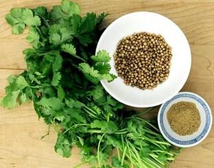 korijander biljka kao lek