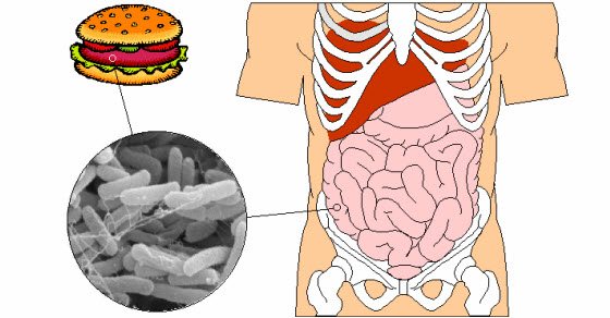 bakterija ešerihija koli