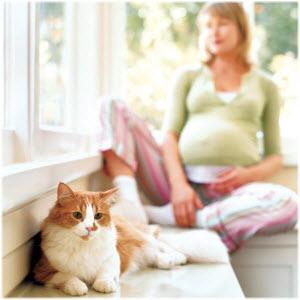 toksoplazmoza u trudnoći