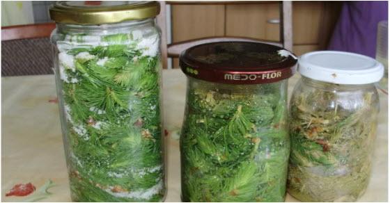 Recept za sirup od borovih iglica sa medom