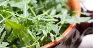 salata od rukole za zdravlje