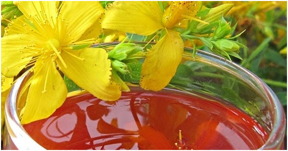 Kako se pravi kantarionovo ulje i upotreba
