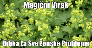 biljka-virak FB