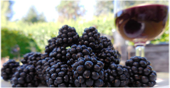 Kako se pravi kupinovo vino za zdravlje