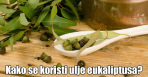 eukaliptus (1)