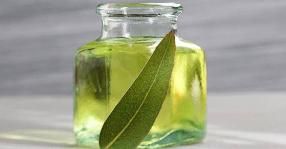 kako koristiti eukaliptusovo ulje