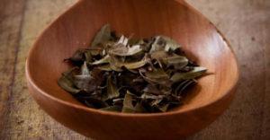 čaj od uve za mokraćne kanale i bubrege