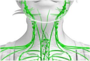 limfa i limmfni sistem