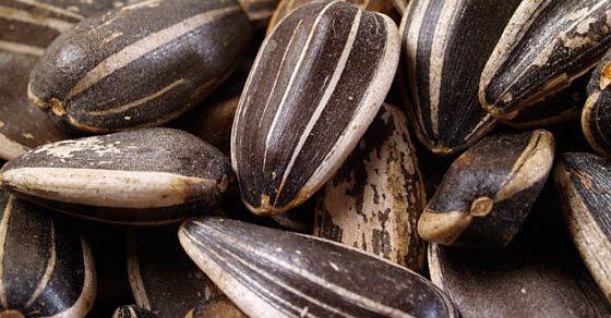Semenke suncokreta za zdravlje