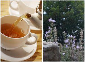 rtanjski čaj lekovita svojstva