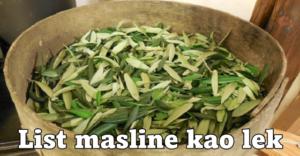 maslina full