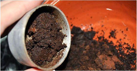 Talog od kafe protiv celulita i bora