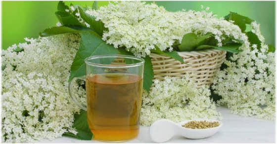 Čaj od zove kao lek priprema i recepti