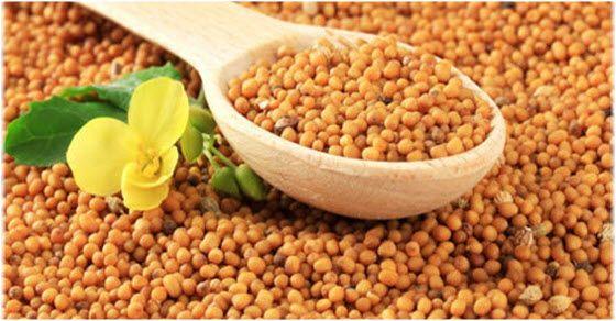 Kako iskoristiti seme slačice u kuhinji