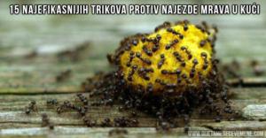 prirodno-sredstvo-protiv-mrava