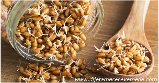 Pšenčne klice upotreba u ishrani i lekovitost