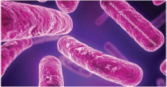 Bakterija klostridija simptomi infekcije i prenošenje