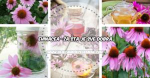 ehinacea-za-FB