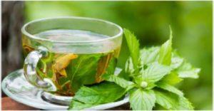 Menta čaj priprema i recept