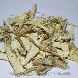 beli slez koren biljke