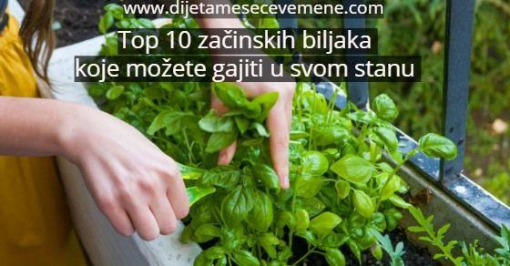 Začinsko bilje u saksijama – uzgoj u stanu i kući