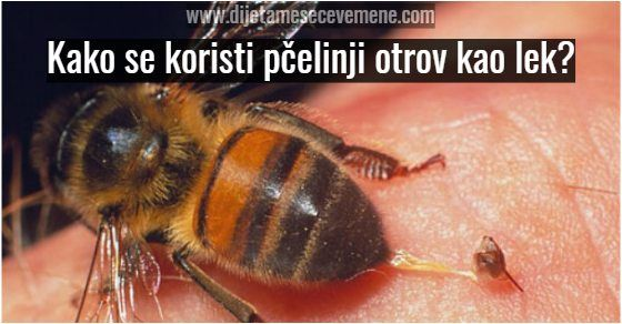 Pčelinji otrov sakupljanje i upotreba za lečenje