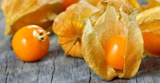 Peruanska jagoda fizalis – lekovitost i recepti